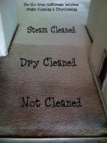 Carpet Cleaning Comparison